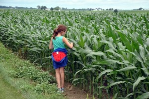Bella touching the corn growing at the Mohr Farm.