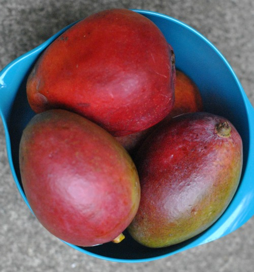 Mangoes in bowl