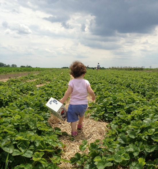 toddler in strawberry field