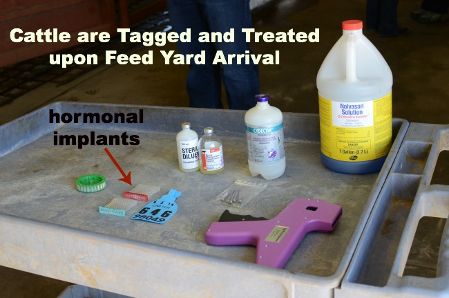 Cattle Implants