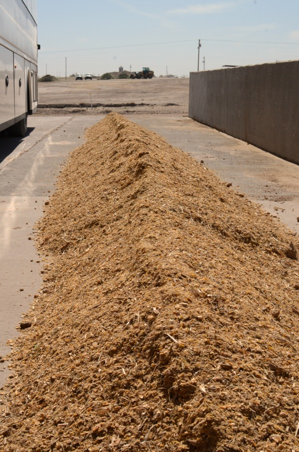 What 3,000 pounds of cattle feed looks like, the amount that would have to be fed if they were not implanted with hormones.
