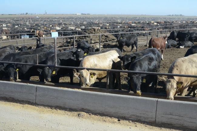 Feed Yard