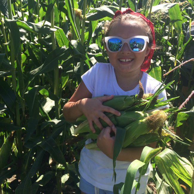 Juju corn pick