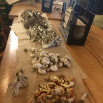 Mushroom Foraging in the Chicago Suburbs