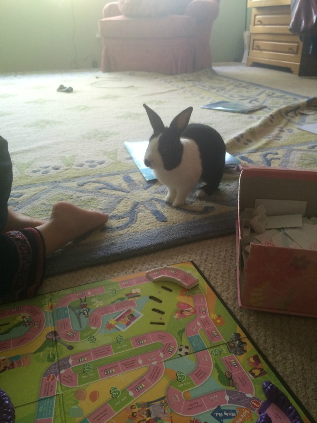 Sophie thinks its hilarious when Bosco tries to join our board games.
